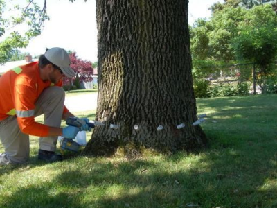 TreeAzin, an injectable pesticide that treats trees attacked by emerald ash borer, has received full registration in Canada from the Pest Management Regulatory Association. Its manufacturer, BioForest Technologies out of Sault Ste. Marie, is now able to market the product across the country.